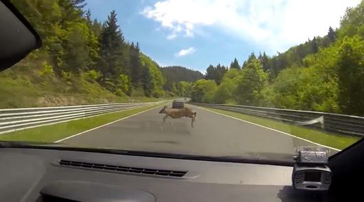 Renault Megane deer strike at the Nurburgring